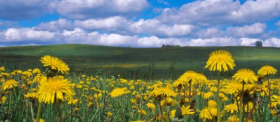 Estonian meadows – a tale of beauty and survival