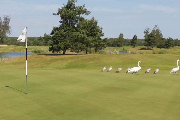 Take your family to Saaremaa for a game of golf